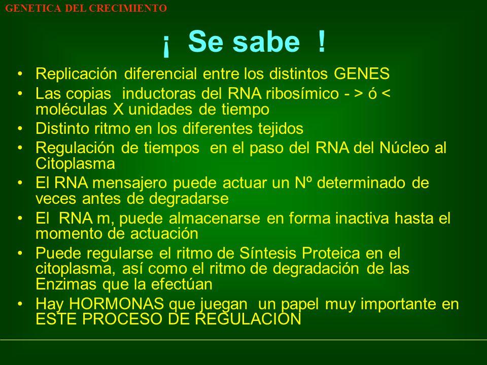 GENETICA DEL CRECIMIENTO ¡ Se sabe ! Replicación diferencial entre los distintos GENES Las copias inductoras del RNA ribosímico - > ó < moléculas X un
