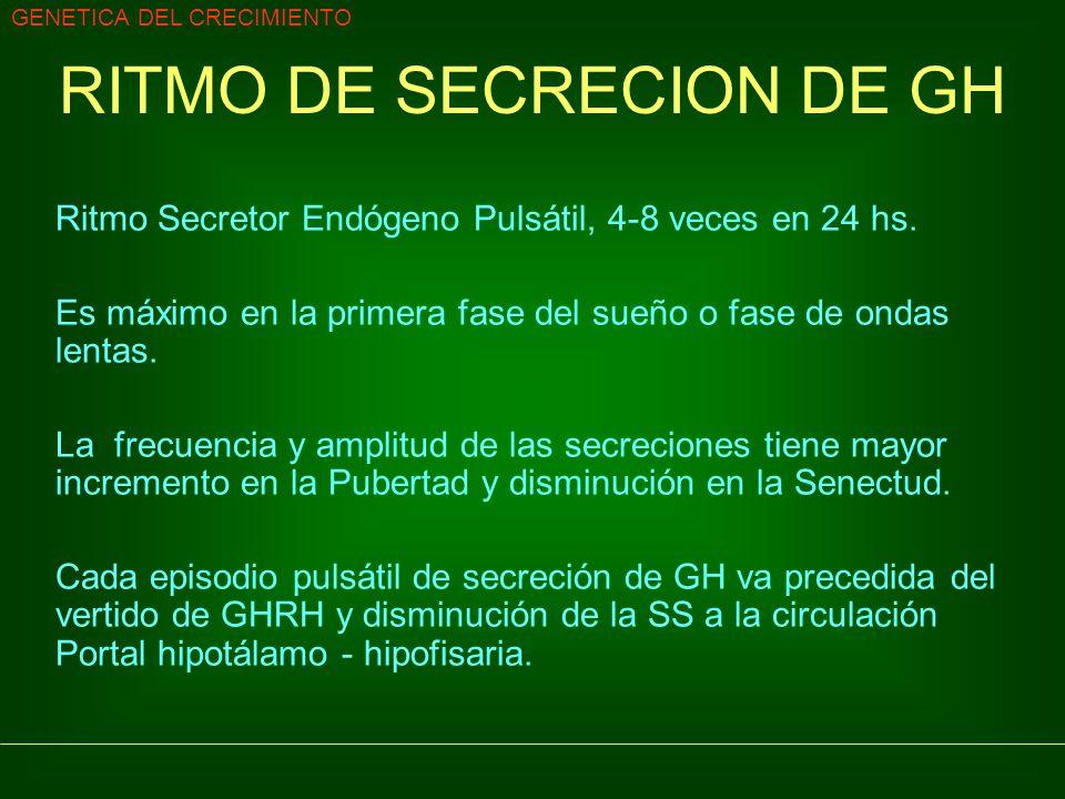 GENETICA DEL CRECIMIENTO RITMO DE SECRECION DE GH Ritmo Secretor Endógeno Pulsátil, 4-8 veces en 24 hs. Es máximo en la primera fase del sueño o fase