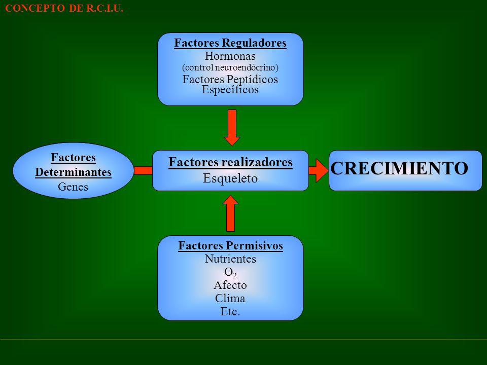 Factores Reguladores Hormonas (control neuroendócrino) Factores Peptídicos Específicos CONCEPTO DE R.C.I.U. Factores Determinantes Genes Factores Perm