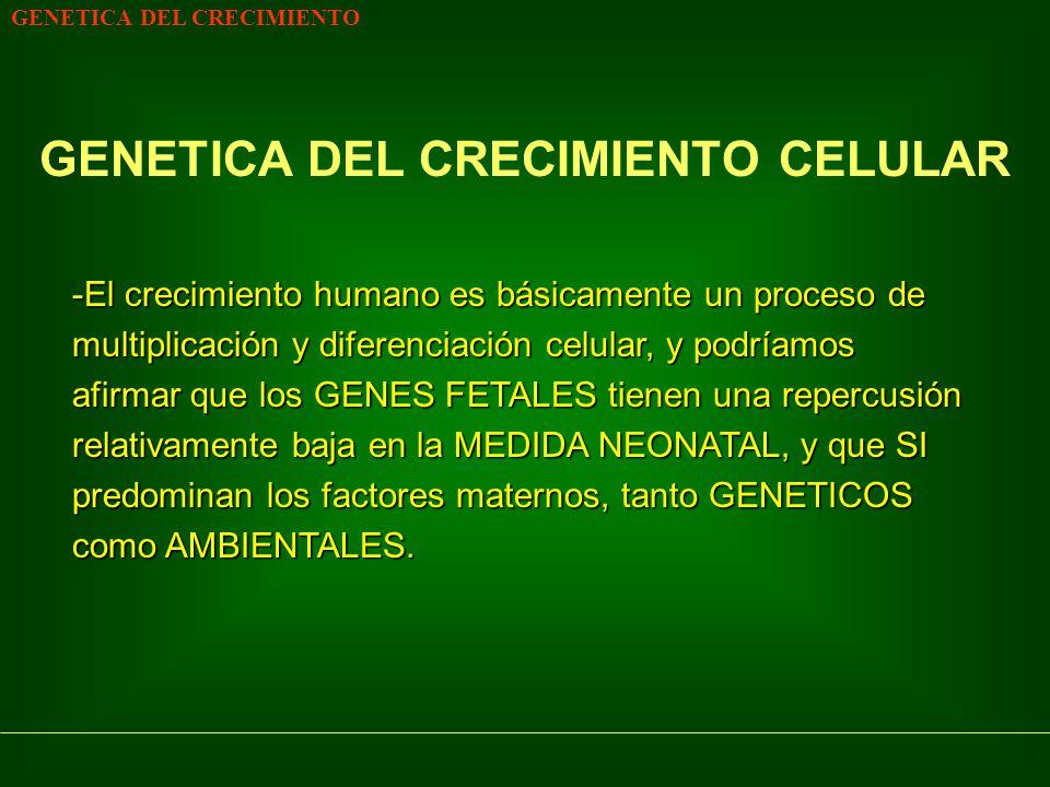 GENETICA DEL CRECIMIENTO CICLO CELULAR Fase InicialFase posterior NO REPRODUCTORAREPRODUCTORA *Biosíntesis DNA *Mitosis - celular *Reconstrucción Núcleo en interfase Núcleo en interfase Duración de cada FASE condiciona el RITMO GLOBAL del CRECIMIENTO FACTORES DE CRECIMIENTORECEPTORES ESPECIFICOS (Polipéptidos)