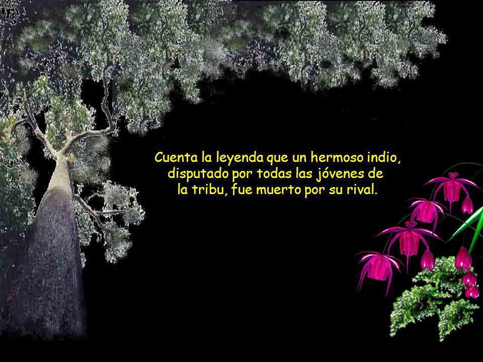 Avance automático El uirapurú Leyenda indígena de la Amazonia