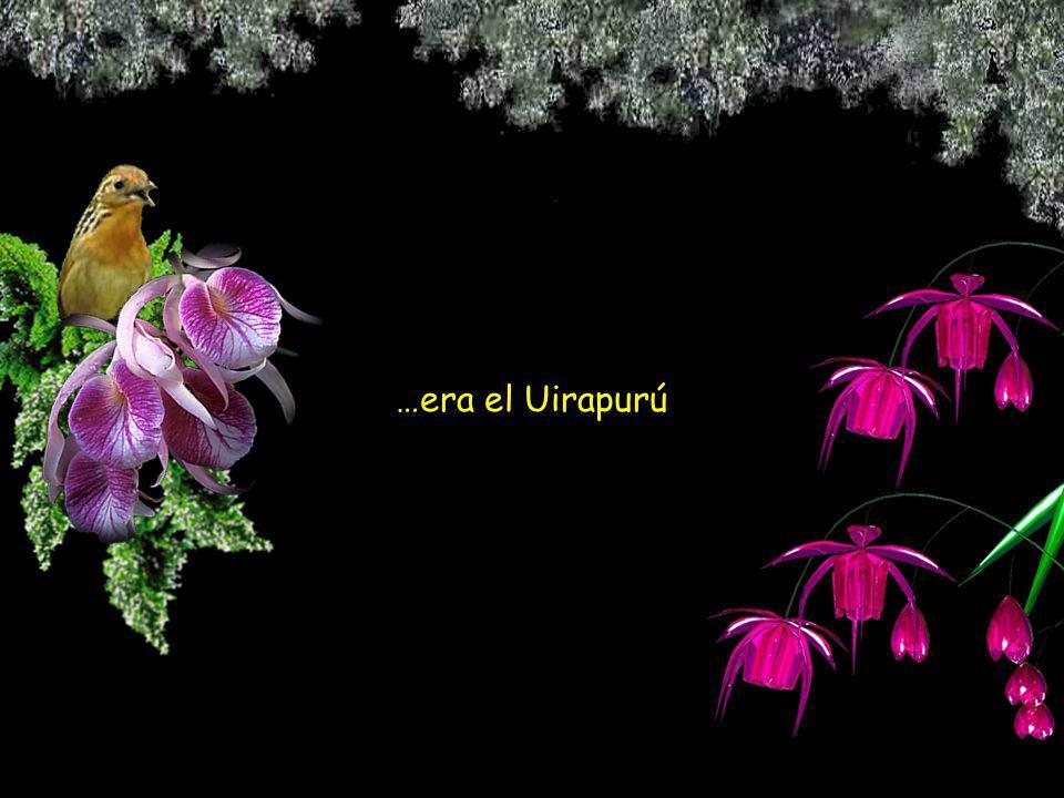 …era el hermoso indio que habían perdido para siempre… …hechizado en un pájaro con la voz más melodiosa de la selva.