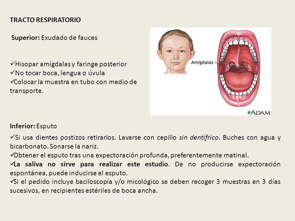 TRACTO RESPIRATORIO Superior: Exudado de fauces Hisopar amígdalas y faringe posterior No tocar boca, lengua o úvula Colocar la muestra en tubo con med