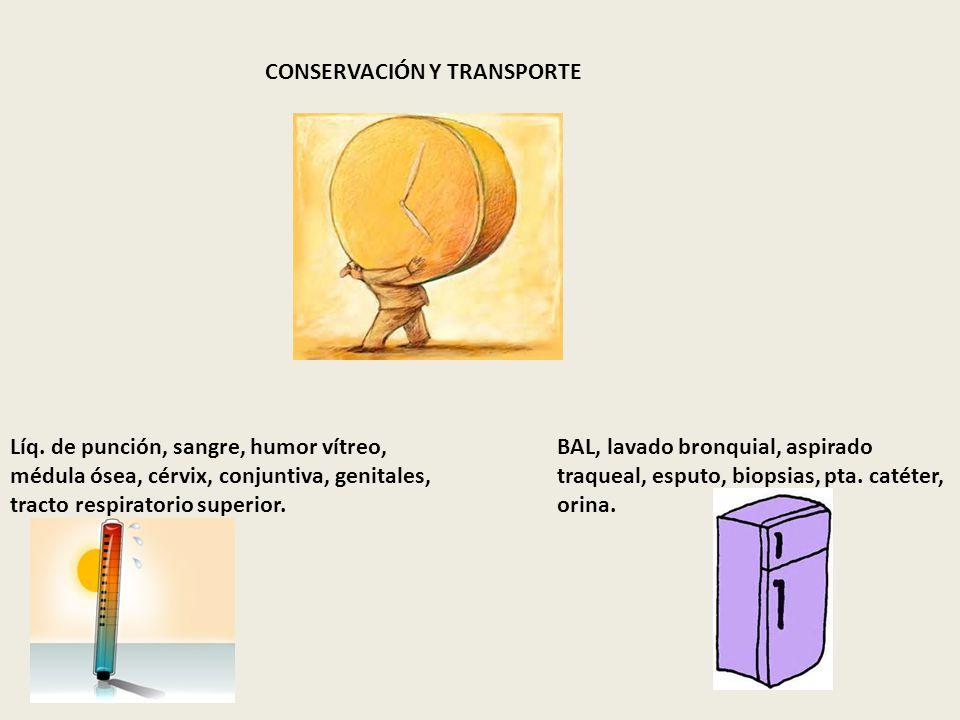 CONSERVACIÓN Y TRANSPORTE Líq. de punción, sangre, humor vítreo, médula ósea, cérvix, conjuntiva, genitales, tracto respiratorio superior. BAL, lavado