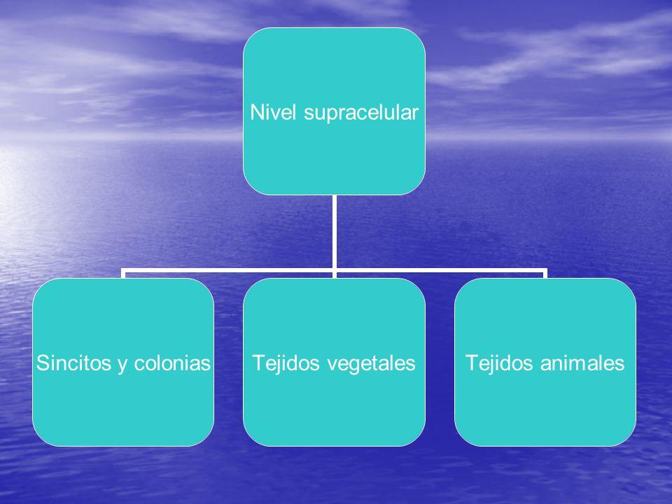 LA REPRODUCCION Celular :mitosis - meiosis Celular :mitosis - meiosis Asexual: agamia Asexual: agamia Sexual Sexual Alternante Alternante Desarrollo embrionario y diferenciación celular Desarrollo embrionario y diferenciación celular