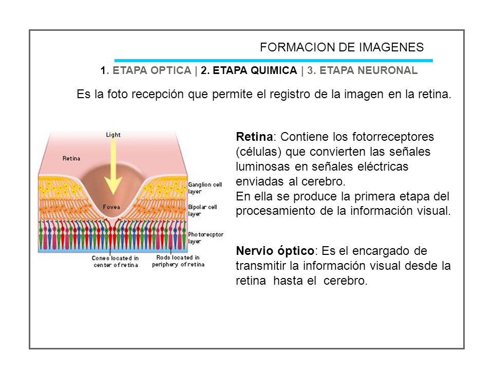 1.ETAPA OPTICA | 2. ETAPA QUIMICA | 3.