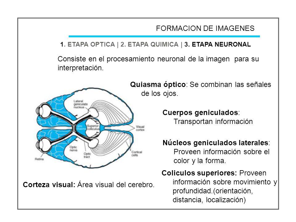 FORMACION DE IMAGENES 1.ETAPA OPTICA | 2. ETAPA QUIMICA | 3.