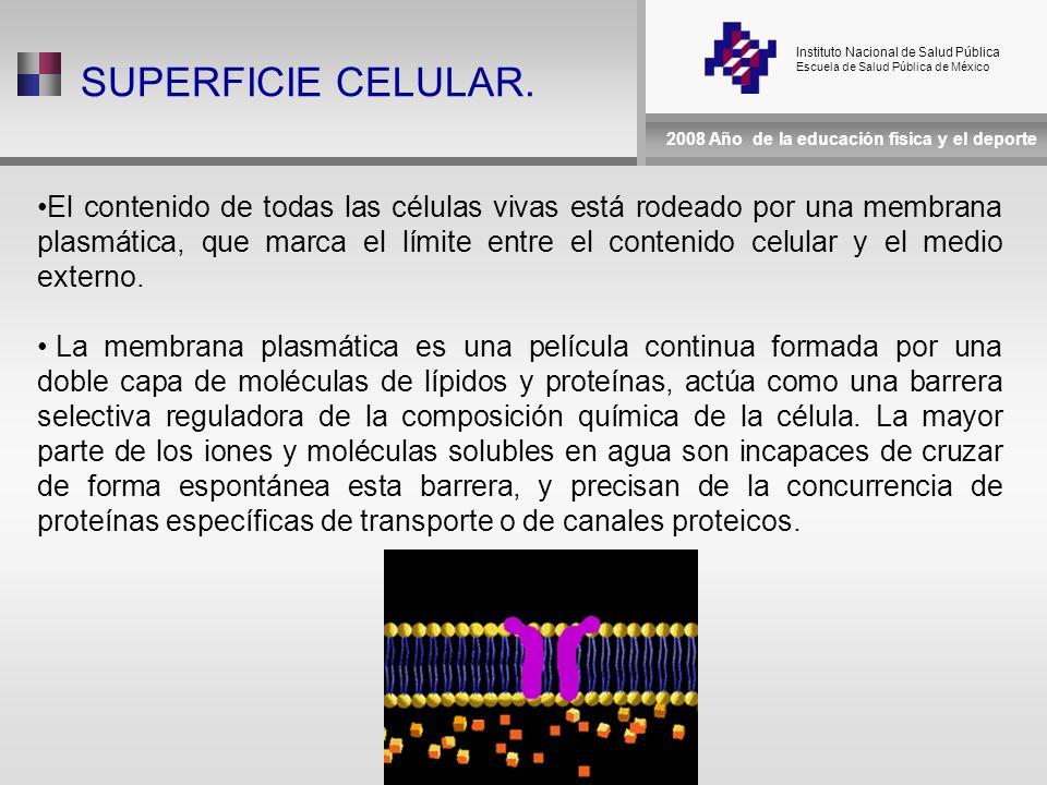 Instituto Nacional de Salud Pública Escuela de Salud Pública de México 2008 Año de la educación física y el deporte SUPERFICIE CELULAR.