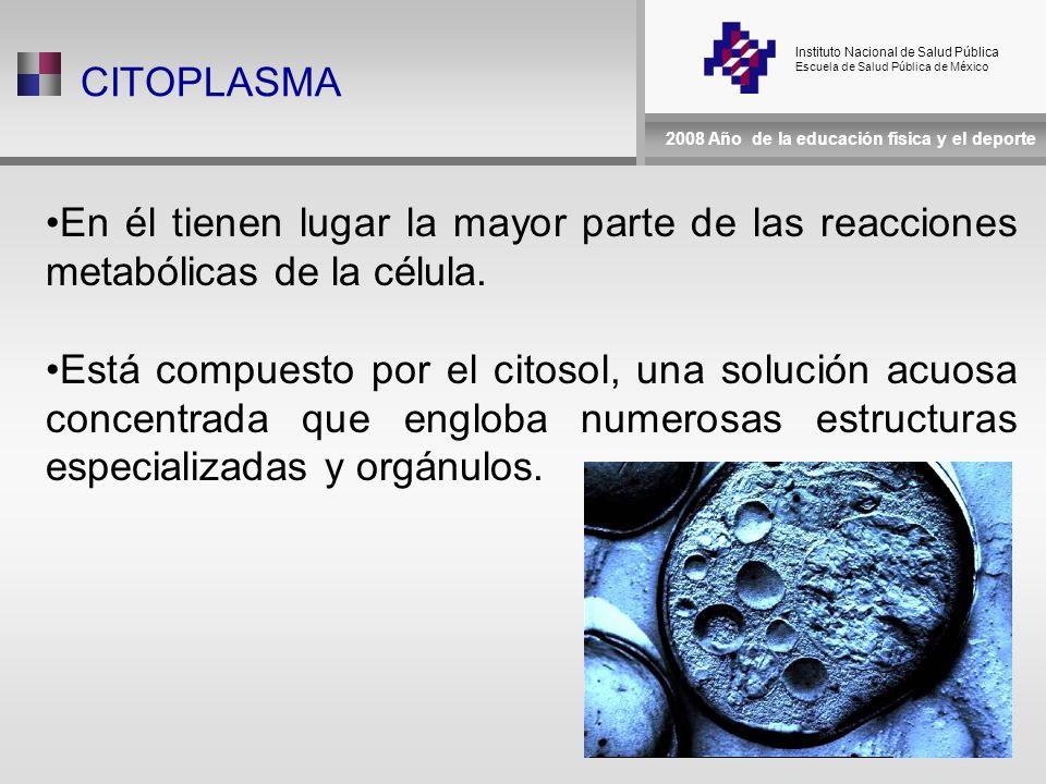 Instituto Nacional de Salud Pública Escuela de Salud Pública de México 2008 Año de la educación física y el deporte CITOPLASMA En él tienen lugar la mayor parte de las reacciones metabólicas de la célula.