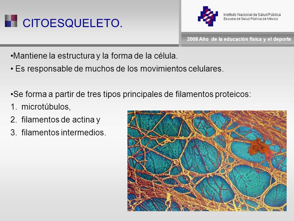 Instituto Nacional de Salud Pública Escuela de Salud Pública de México 2008 Año de la educación física y el deporte CITOESQUELETO.
