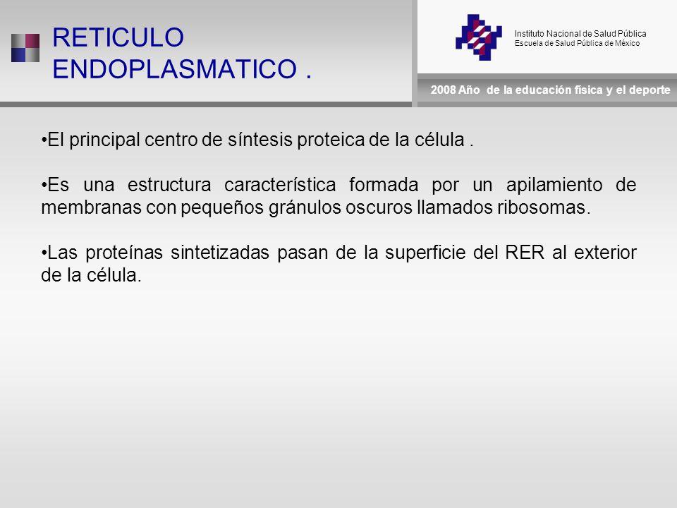 Instituto Nacional de Salud Pública Escuela de Salud Pública de México 2008 Año de la educación física y el deporte RETICULO ENDOPLASMATICO.