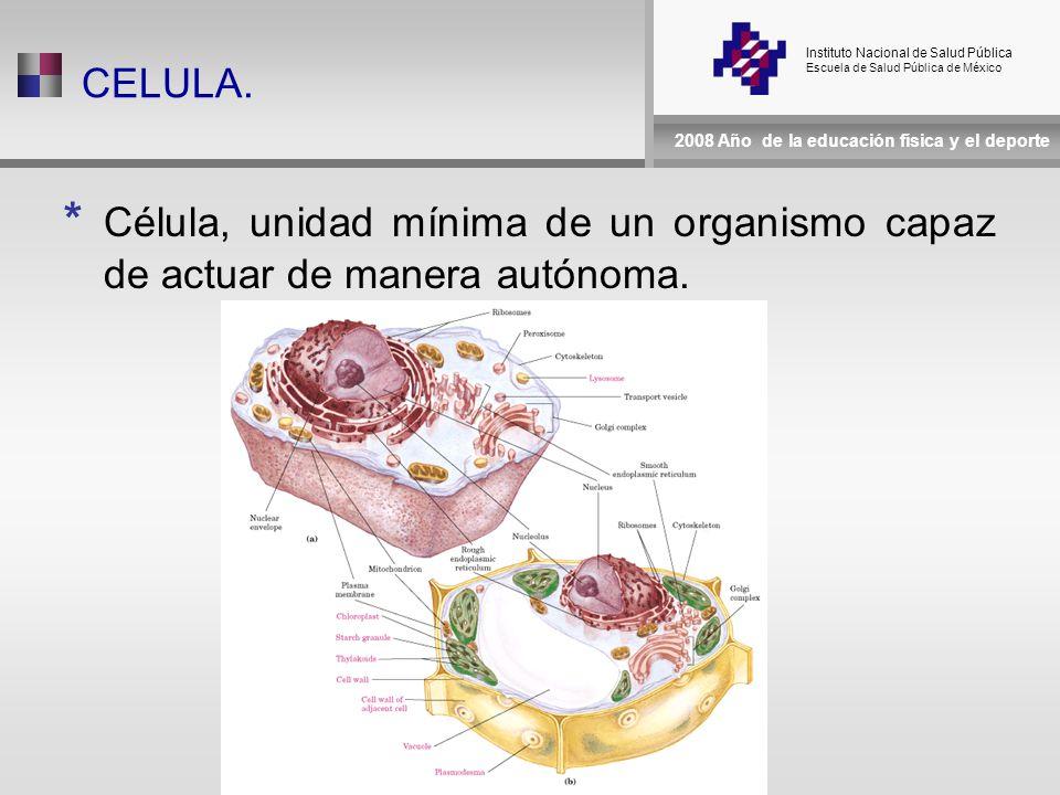Instituto Nacional de Salud Pública Escuela de Salud Pública de México 2008 Año de la educación física y el deporte CELULA.