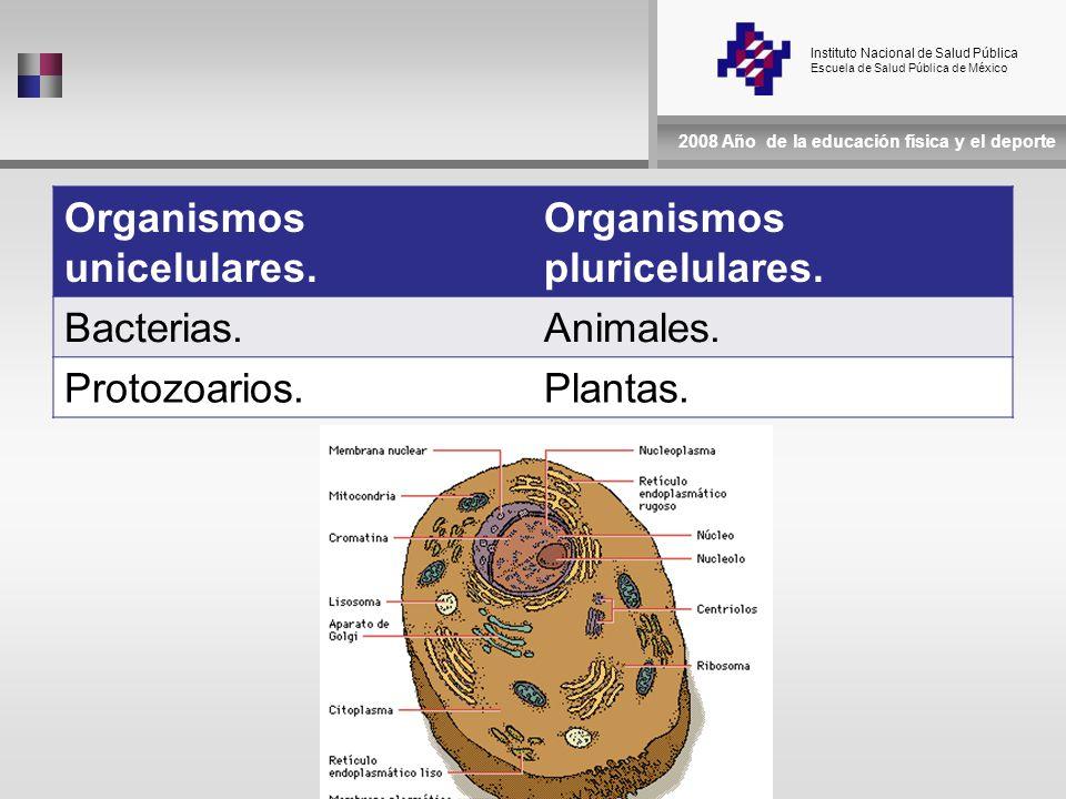 Instituto Nacional de Salud Pública Escuela de Salud Pública de México 2008 Año de la educación física y el deporte Organismos unicelulares.
