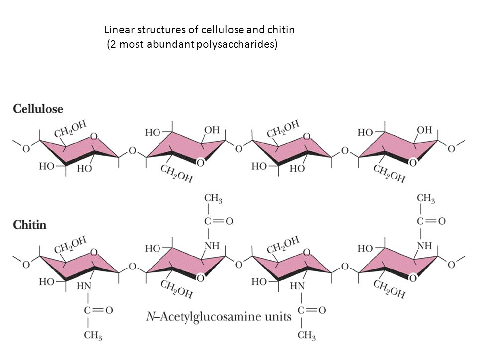 Linear structures of cellulose and chitin (2 most abundant polysaccharides)