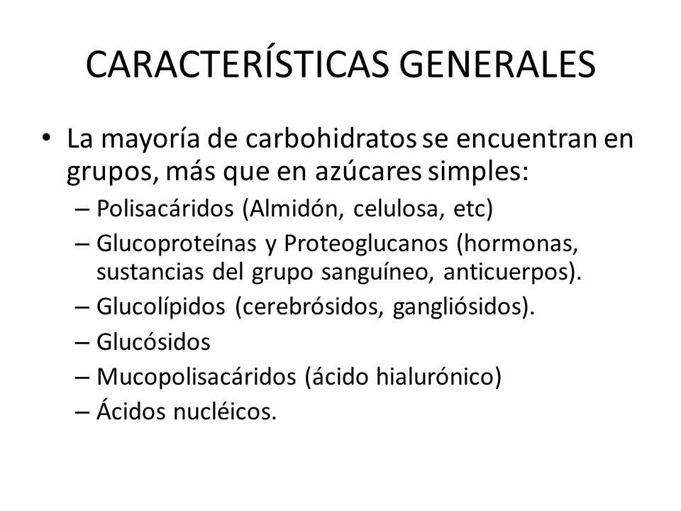 FUNCIONES Los carbohidratos desempeñan una gran variedad de funciones en los organismos vivos: – Fuentes de energía.