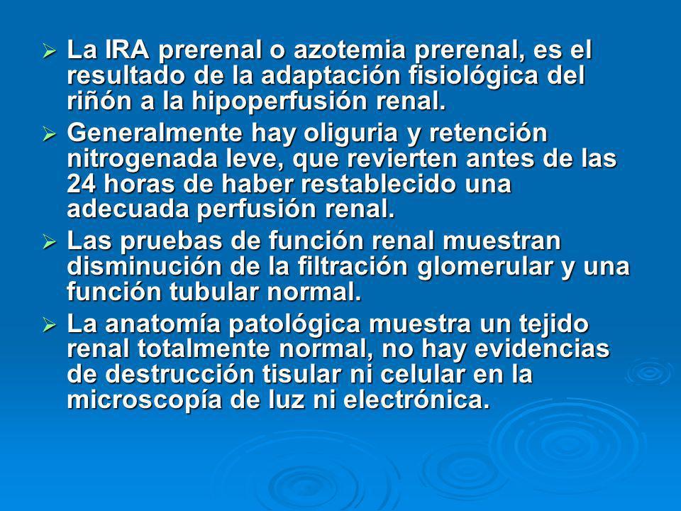 La IRA prerenal o azotemia prerenal, es el resultado de la adaptación fisiológica del riñón a la hipoperfusión renal. La IRA prerenal o azotemia prere