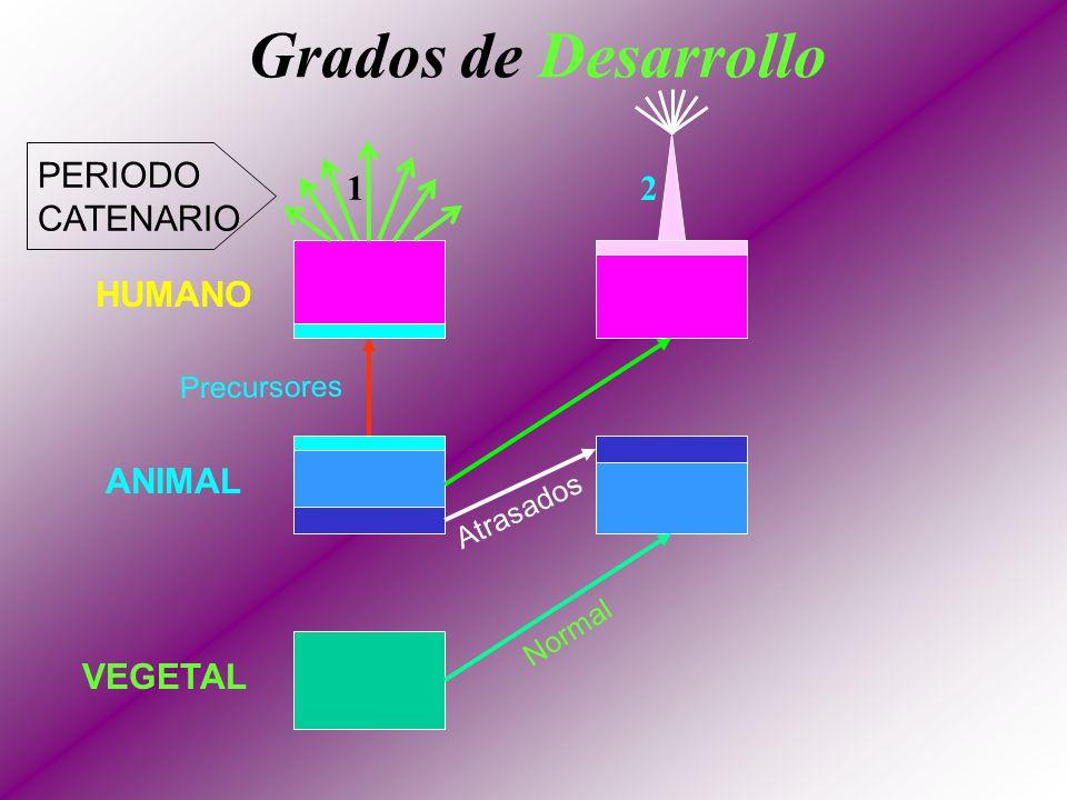 Metas fijadas de las Cadenas (Esquema Terrestre) PRIMER INICIACION TERCER INICIACION CUARTA INICIACION QUINTA INICIACION DESCONOCIDA (MUY ELEVADA) 1 2