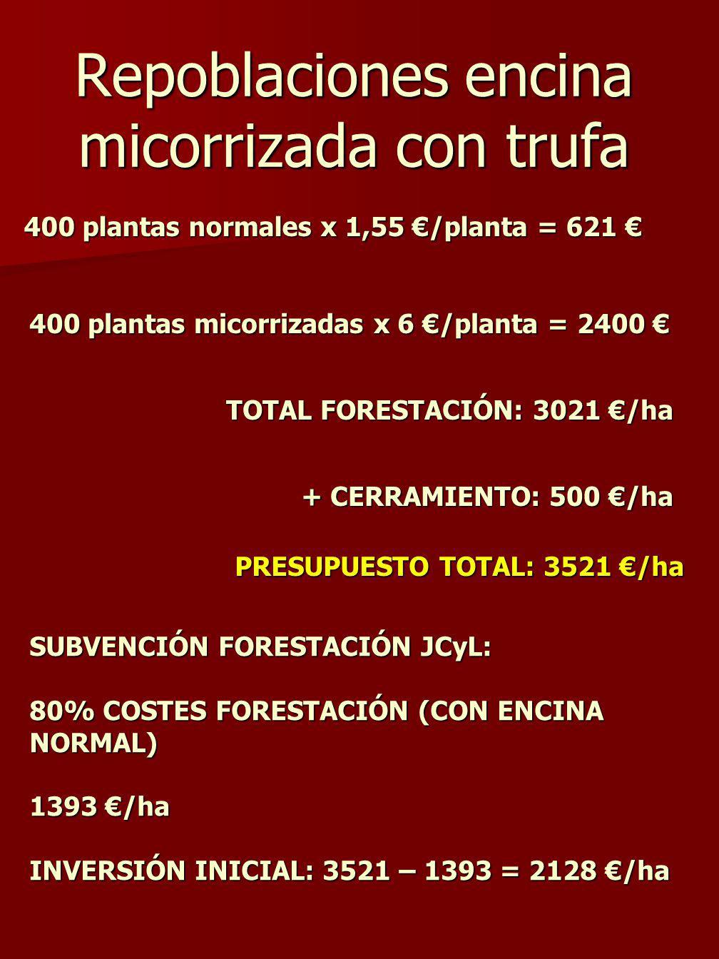 Repoblaciones encina micorrizada con trufa 400 plantas normales x 1,55 /planta = 621 400 plantas normales x 1,55 /planta = 621 400 plantas micorrizadas x 6 /planta = 2400 400 plantas micorrizadas x 6 /planta = 2400 TOTAL FORESTACIÓN: 3021 /ha + CERRAMIENTO: 500 /ha PRESUPUESTO TOTAL: 3521 /ha SUBVENCIÓN FORESTACIÓN JCyL: 80% COSTES FORESTACIÓN (CON ENCINA NORMAL) 1393 /ha INVERSIÓN INICIAL: 3521 – 1393 = 2128 /ha