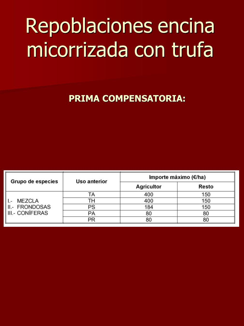 Repoblaciones encina micorrizada con trufa PRIMA COMPENSATORIA: