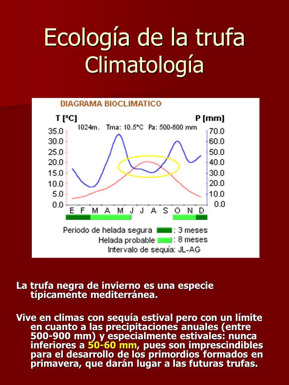 Ecología de la trufa Climatología La trufa negra de invierno es una especie típicamente mediterránea.