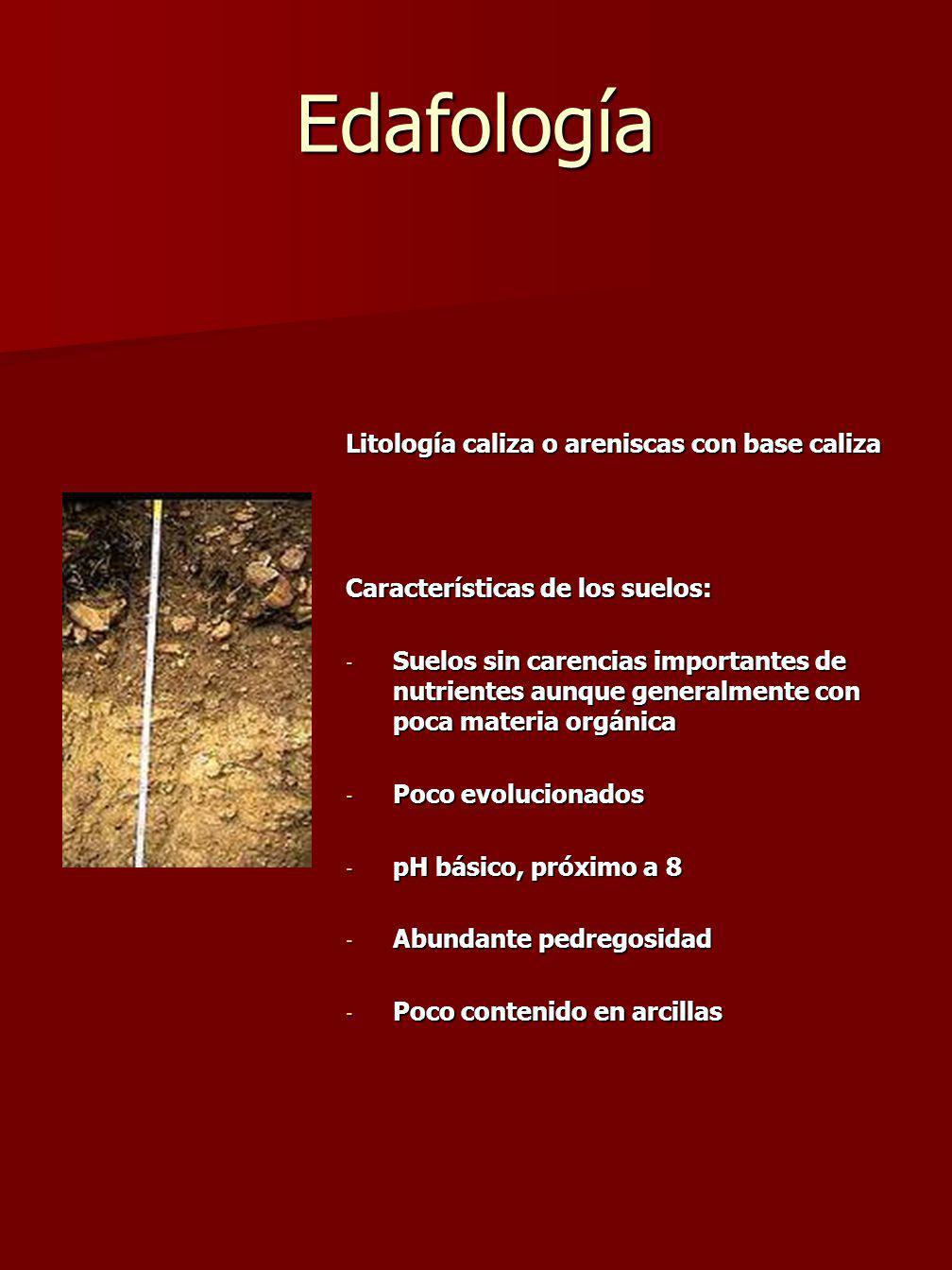 Edafología Litología caliza o areniscas con base caliza Características de los suelos: - Suelos sin carencias importantes de nutrientes aunque generalmente con poca materia orgánica - Poco evolucionados - pH básico, próximo a 8 - Abundante pedregosidad - Poco contenido en arcillas
