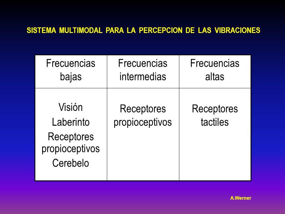 SISTEMA MULTIMODAL PARA LA PERCEPCION DE LAS VIBRACIONES Frecuencias altas Receptores tactiles Frecuencias intermedias Receptores propioceptivos Frecuencias bajas Visión Laberinto Receptores propioceptivos Cerebelo A.Werner