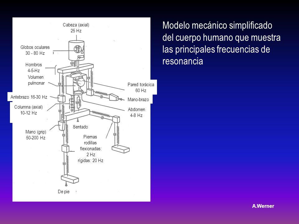 Modelo mecánico simplificado del cuerpo humano que muestra las principales frecuencias de resonancia Pared torácica 60 Hz Abdomen 4-8 Hz Cabeza (axial) 25 Hz Globos oculares 30 - 80 Hz Columna (axial) 10-12 Hz Piernas rodillas flexionadas: 2 Hz rígidas: 20 Hz Hombros 4-5-Hz Volumen pulmonar Antebrazo 16-30 Hz Mano (grip) 50-200 Hz De pie Sentado Mano-brazo A.Werner