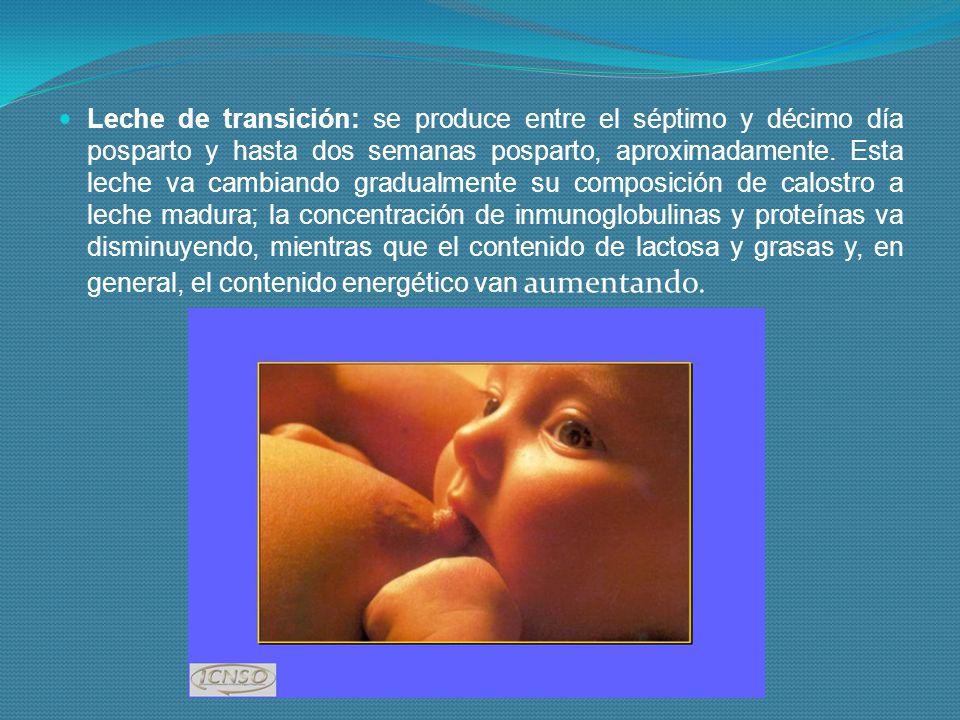 Leche de transición: se produce entre el séptimo y décimo día posparto y hasta dos semanas posparto, aproximadamente. Esta leche va cambiando gradualm