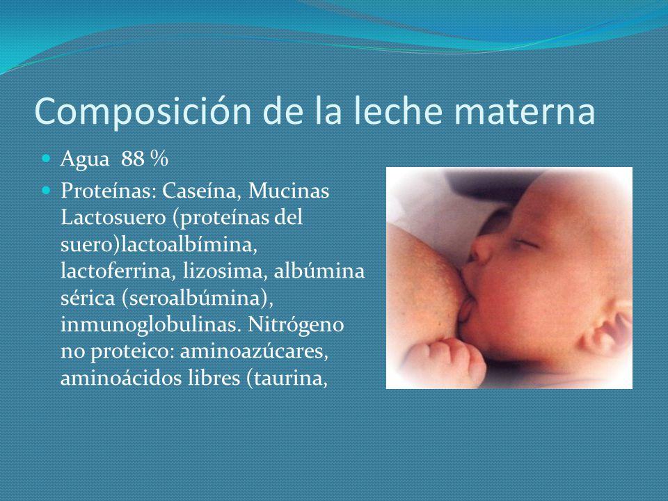 Composición de la leche materna Agua 88 % Proteínas: Caseína, Mucinas Lactosuero (proteínas del suero)lactoalbímina, lactoferrina, lizosima, albúmina