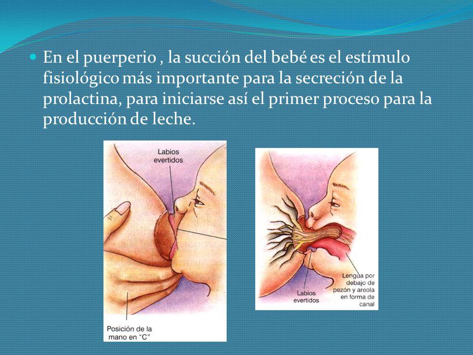En el puerperio, la succión del bebé es el estímulo fisiológico más importante para la secreción de la prolactina, para iniciarse así el primer proces