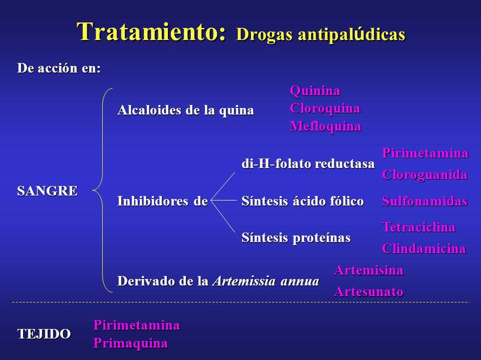 Tratamiento: Drogasantipal ú dicas Tratamiento: Drogas antipal ú dicas Pirimetamina Primaquina TEJIDO ArtemisinaArtesunato Derivado de la Artemissia annua TetraciclinaClindamicina Síntesis proteínas Sulfonamidas Síntesis ácido fólico Inhibidores de PirimetaminaCloroguanida di-H-folato reductasa SANGREQuininaCloroquinaMefloquina Alcaloides de la quina De acción en: