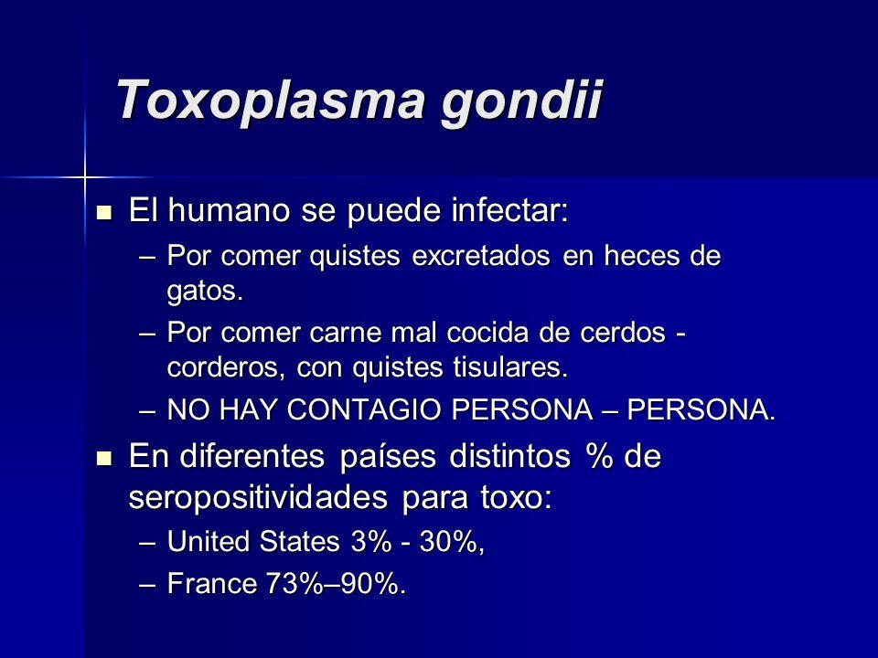 Toxoplasma gondii El humano se puede infectar: El humano se puede infectar: –Por comer quistes excretados en heces de gatos.