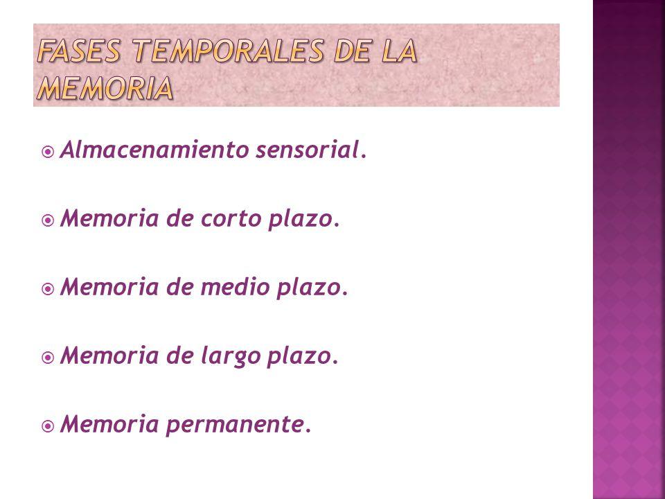 Almacenamiento sensorial. Memoria de corto plazo. Memoria de medio plazo. Memoria de largo plazo. Memoria permanente.
