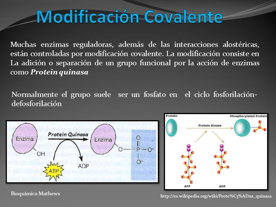 Muchas enzimas reguladoras, además de las interacciones alostéricas, están controladas por modificación covalente. La modificación consiste en La adic