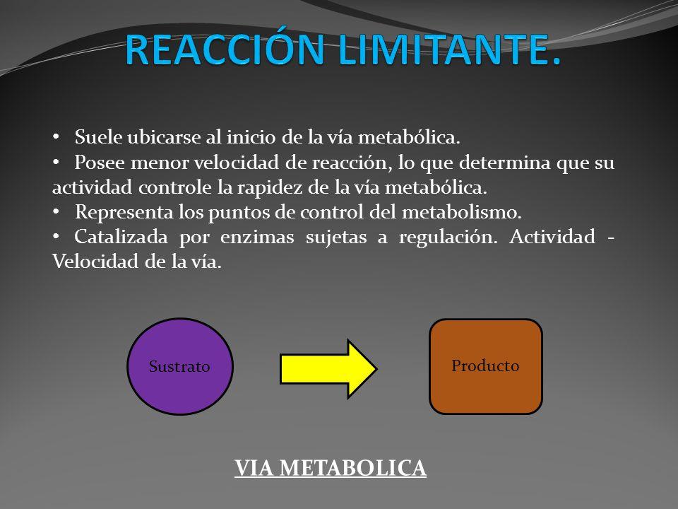 Suele ubicarse al inicio de la vía metabólica. Posee menor velocidad de reacción, lo que determina que su actividad controle la rapidez de la vía meta