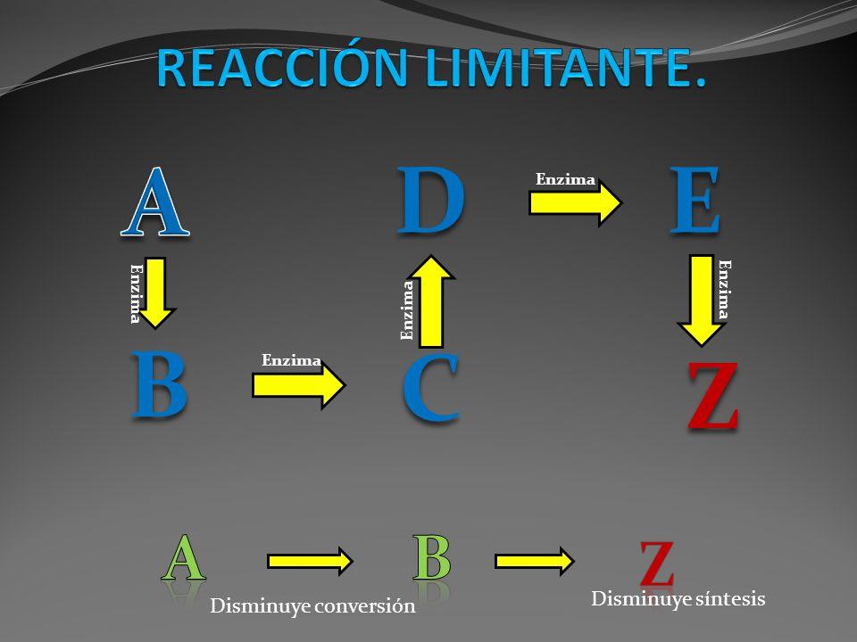 B C DE Z Enzima Disminuye conversión Disminuye síntesis