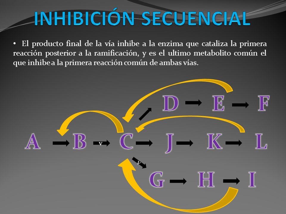 El producto final de la vía inhibe a la enzima que cataliza la primera reacción posterior a la ramificación, y es el ultimo metabolito común el que in