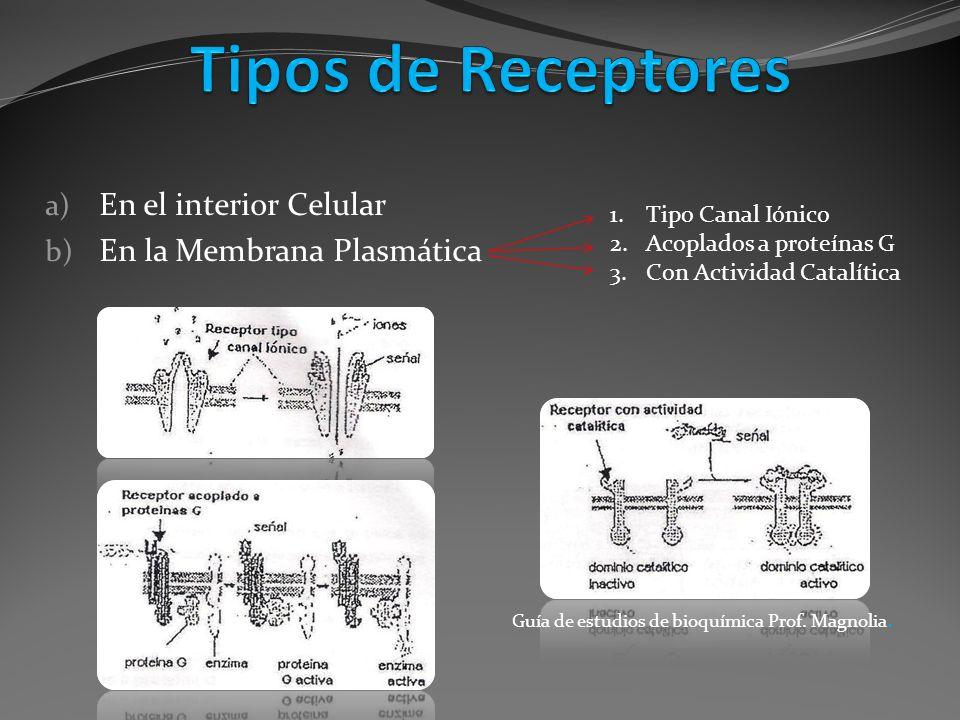 a) En el interior Celular b) En la Membrana Plasmática 1.Tipo Canal Iónico 2.Acoplados a proteínas G 3.Con Actividad Catalítica Guía de estudios de bi