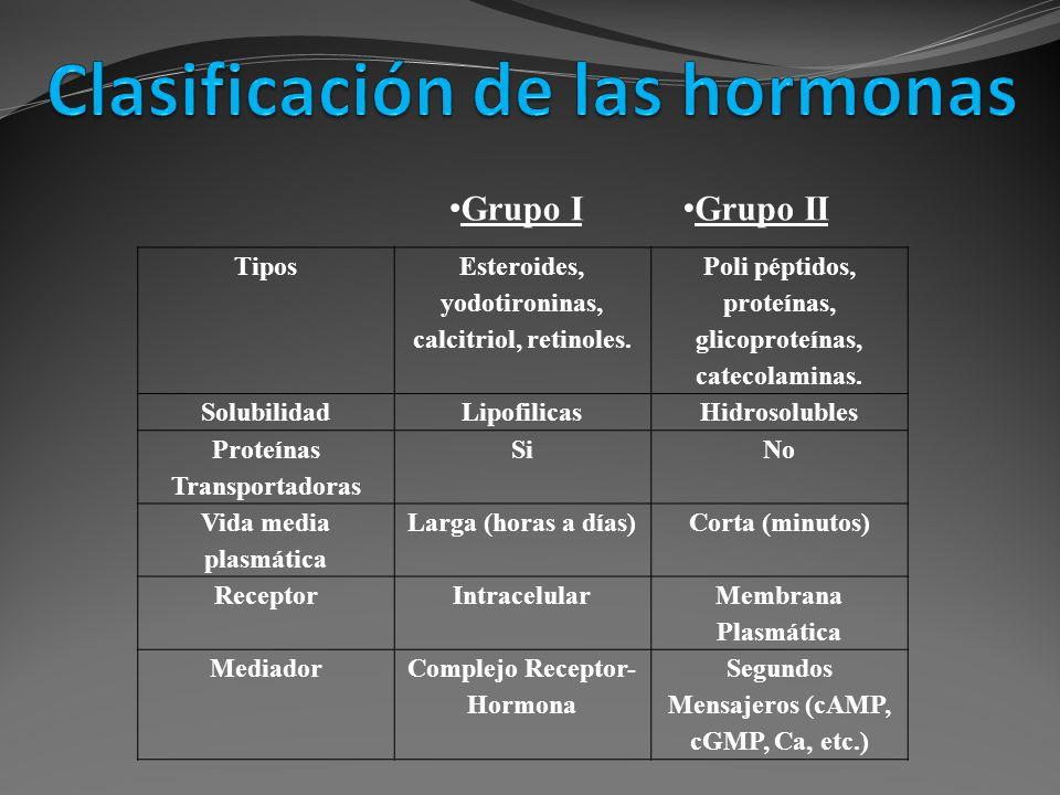 Grupo II Grupo I Tipos Esteroides, yodotironinas, calcitriol, retinoles. Poli péptidos, proteínas, glicoproteínas, catecolaminas. SolubilidadLipofilic