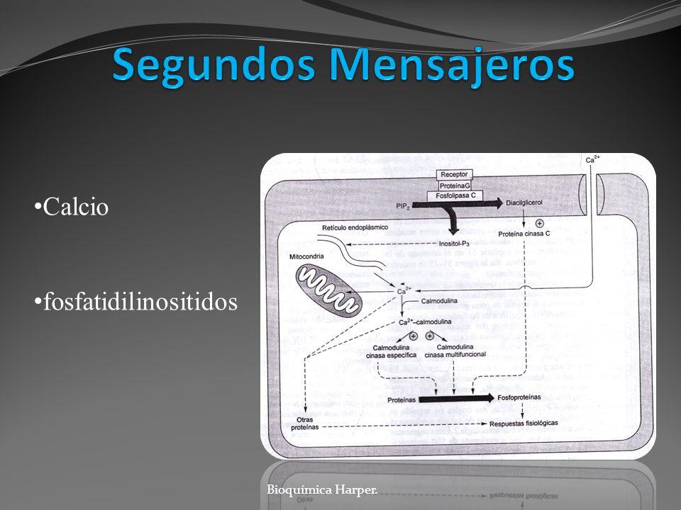 Calcio fosfatidilinositidos Bioquímica Harper.