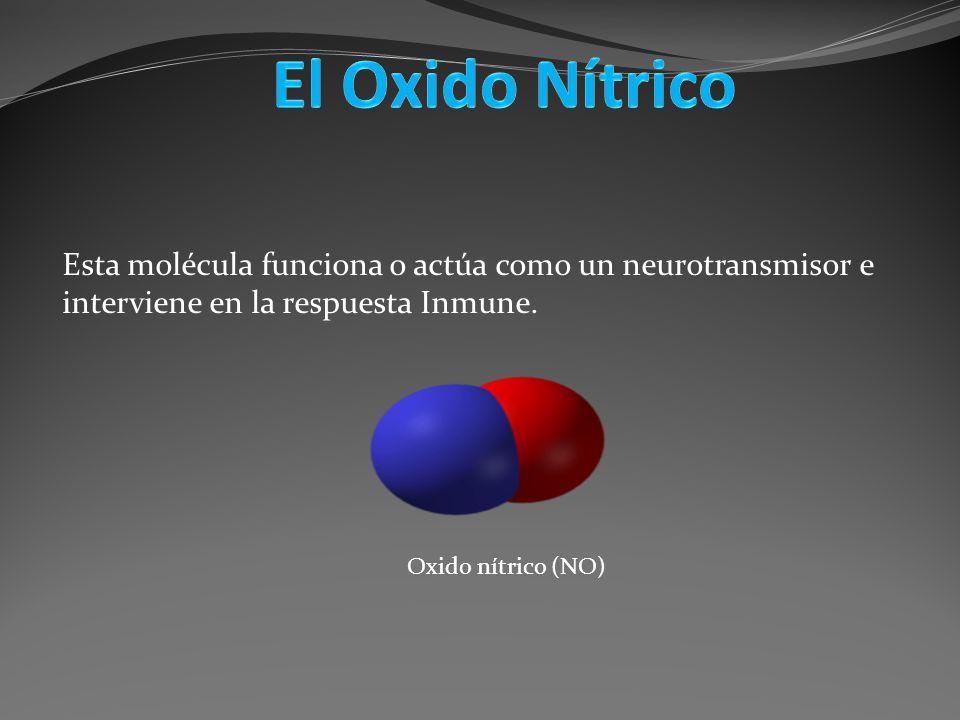 Esta molécula funciona o actúa como un neurotransmisor e interviene en la respuesta Inmune. Oxido nítrico (NO)