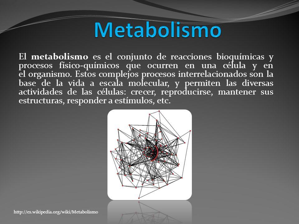 El metabolismo es el conjunto de reacciones bioquímicas y procesos físico-químicos que ocurren en una célula y en el organismo. Estos complejos proces