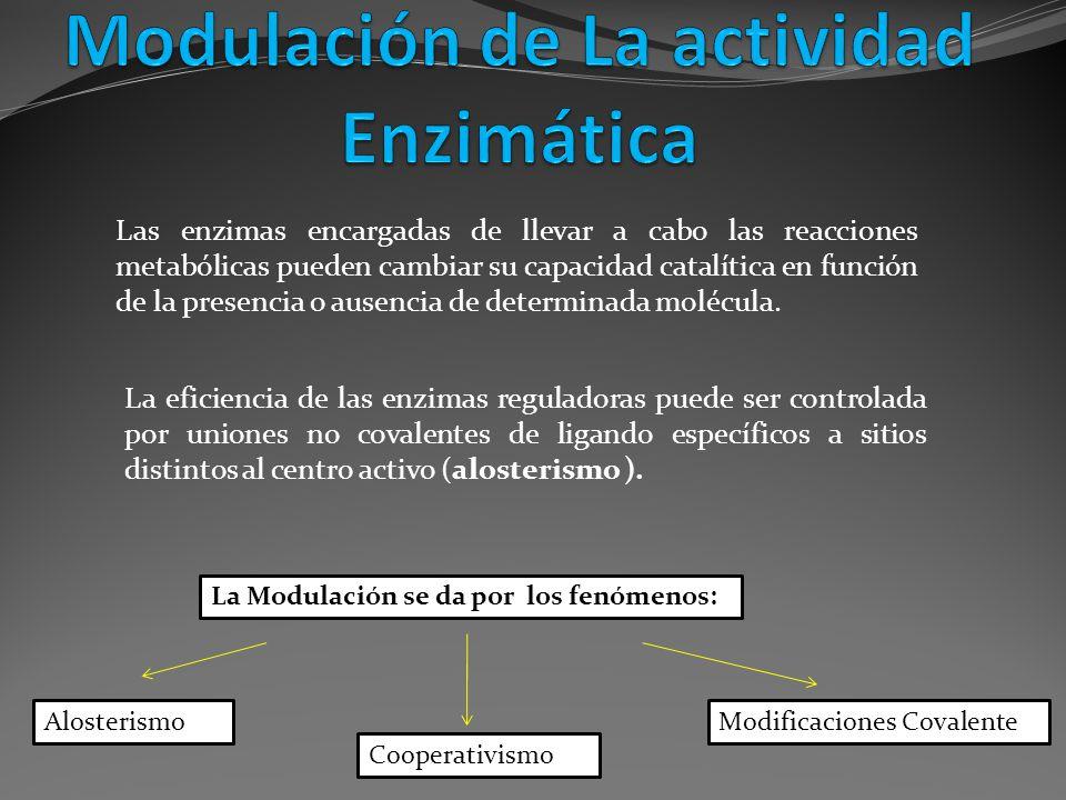 La eficiencia de las enzimas reguladoras puede ser controlada por uniones no covalentes de ligando específicos a sitios distintos al centro activo (al