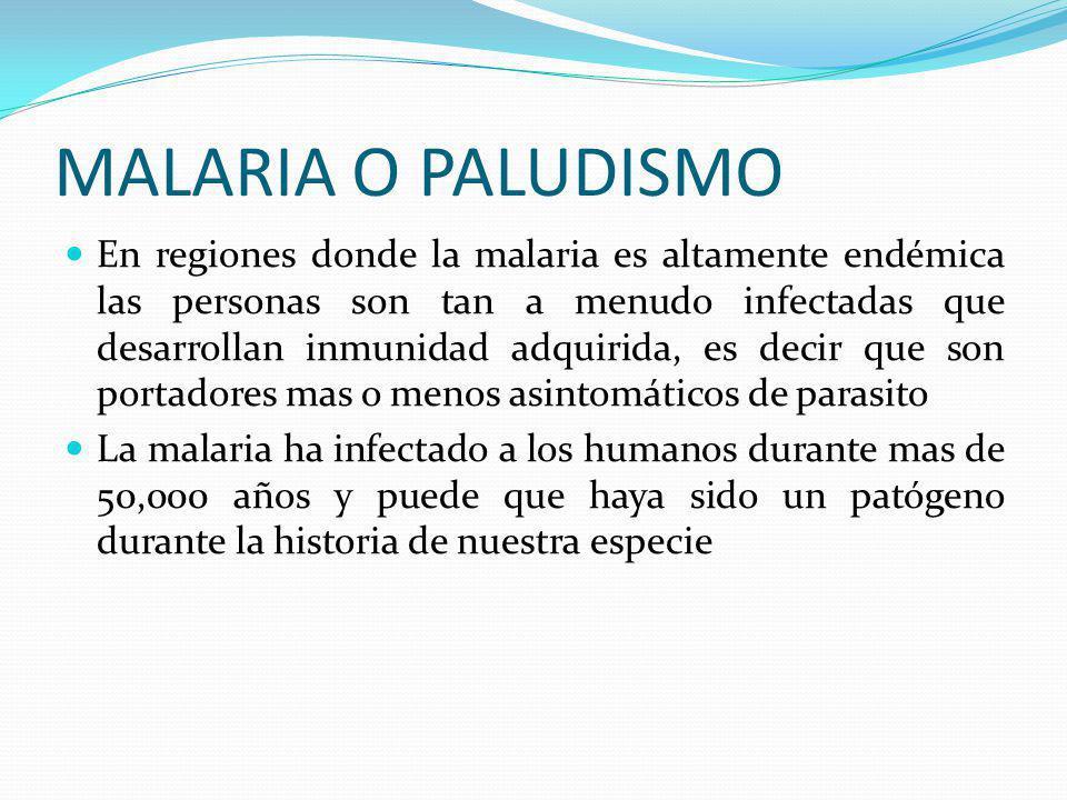 LA MALARIA O PALUDISMO Los vectores de esta enfermedad son las diversas especies del mosquito Anofeles Las hembras son las que se alimentan de sangre