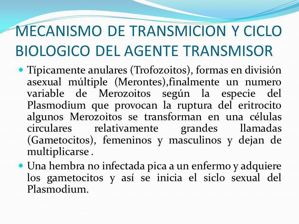 MECANISMO DE TRANSMICION Y CICLO BIOLOGICO DEL AGENTE TRANSMISOR La hembra infectada del Anofeles es portadora de los Esporozoitos de Plasmodium en su