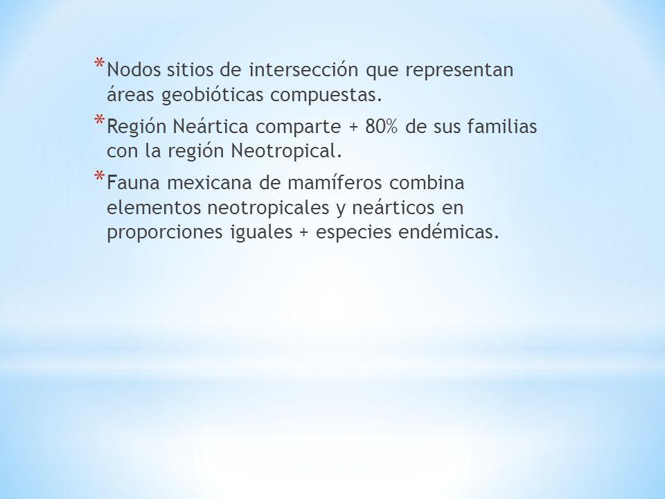 * Nodos sitios de intersección que representan áreas geobióticas compuestas. * Región Neártica comparte + 80% de sus familias con la región Neotropica