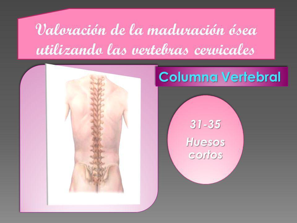 Valoración de la maduración ósea utilizando las vertebras cervicales Columna Vertebral 31-35 Huesos cortos