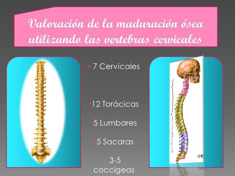 Valoración de la maduración ósea utilizando las vertebras cervicales 7 Cervicales 12 Torácicas 5 Lumbares 5 Sacaras 3-5 coccígeas