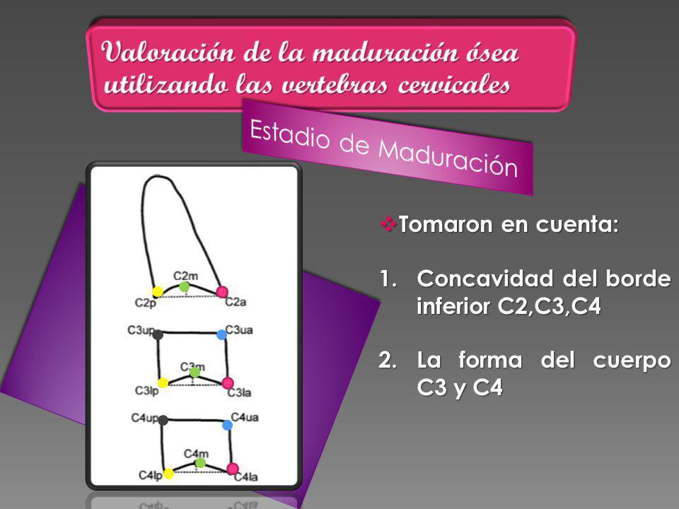 Tomaron en cuenta: Tomaron en cuenta: 1.Concavidad del borde inferior C2,C3,C4 2.La forma del cuerpo C3 y C4