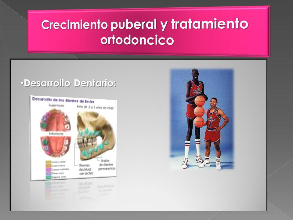 Desarrollo Dentario: Desarrollo Dentario: